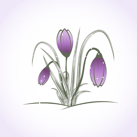 Beautiful purple crocus flower under snow Vector