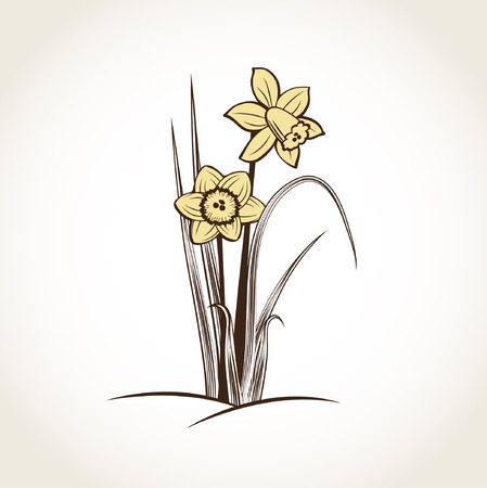 jonquil: Spring daffodils. Vector background  Illustration
