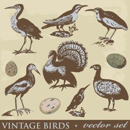 Vintage birds illustrations. Vector set