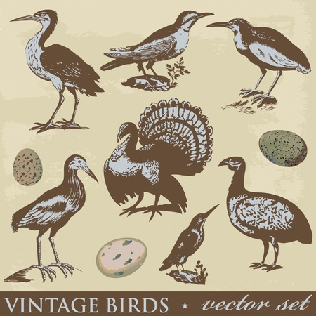 Vintage birds illustrations. Vector set  Stock Vector - 9306501