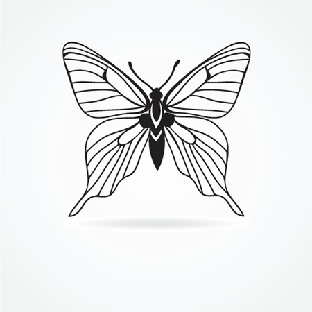 butterfly isolated on white background Stock Vector - 19020422