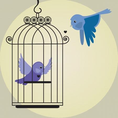 prison: Cute bird in birdcage