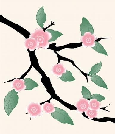 transparently: Blossom cherry - Greeting Card Illustration