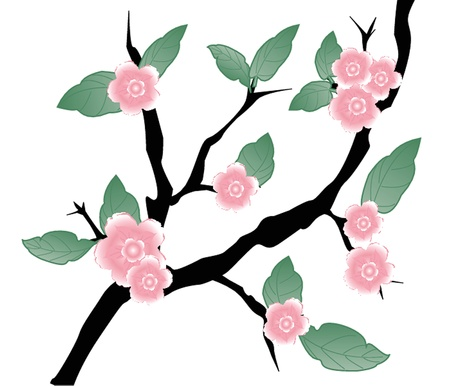 Blossom cherry - Greeting Card photo