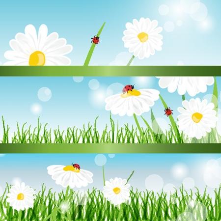 Banderas del verano con margaritas y mariquitas en la hierba verde