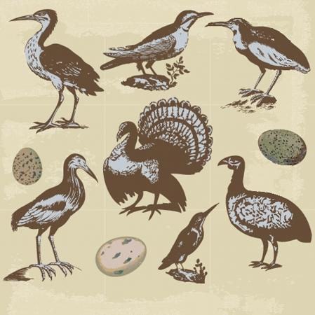 Vintage birds illustrations. Vector set Vector