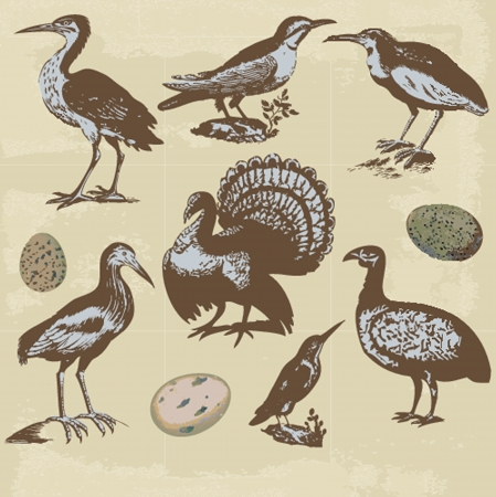 Vintage birds illustrations. Vector set Stock Vector - 19861936