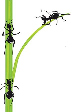 following: Ants. Vector. Illustration