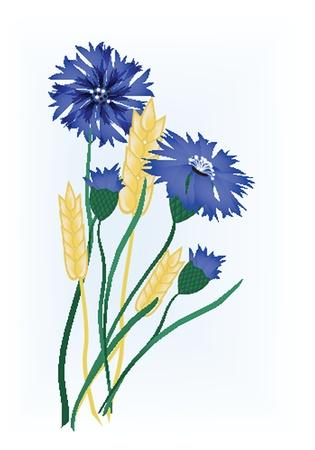 caryopsis: Wheat ears Illustration
