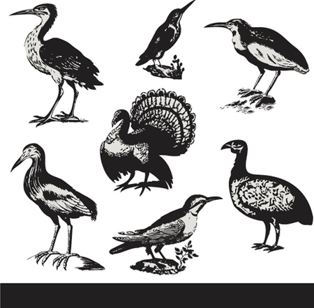 cormorant: Vintage birds illustrations. Vector set