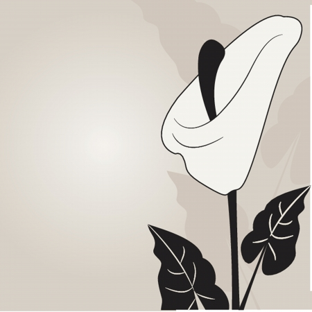 funeral: Vector illustration of calla lilies