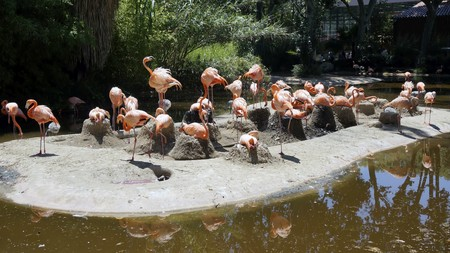 A flock of Flamingos on the island in the wild photo