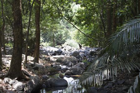 periyar: The mysterious jungles of India .Indiya Goa.