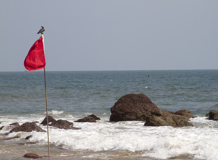 Red flag with the bird sitting on it. GOA India Beach. photo