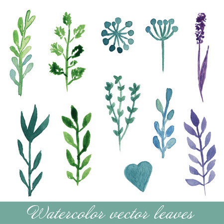 Watercolor floral set. Set of hand drawn plants and flowers for design. Provence field flowers cornflower, poppy, sweet pea, lavender, clove.