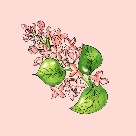 abloom: Florecimiento rama de �rbol de manzanas en el fondo de color rosa. Ejemplo de la acuarela floral. Tarjeta del vector Vectores