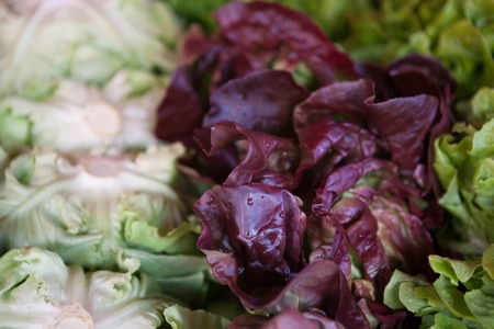 radicchio: Salad mix with rucola, frisee, radicchio and lambs lettuce.