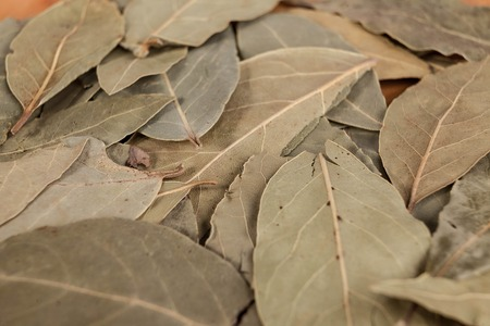 bay leaf: Dry leaves of bay leaf with seeds of black pepper, a nice photo for culinary magazines. Stock Photo