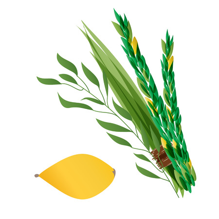 arava: Vetor illustration of four species - palm, willow, myrtle , lemon - symbols of Jewish holiday Sukkot. Holiday of Sukkot illustration.