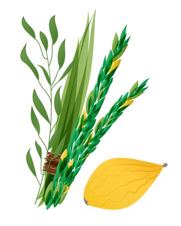 jewish holiday: Vetor illustration of four species - palm, willow, myrtle , lemon - symbols of Jewish holiday Sukkot. Holiday of Sukkot illustration.