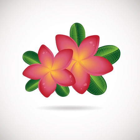 backgrouns: Pink plumeria flower. Vector illustration of Two Frangipani flowers with green leaves on white backgrouns. Spa or beauty center logo Illustration