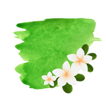 plumeria flower: White plumeria flower logotype. Vector illustration of white Two Frangipani flowers with green leaves. Spa or beauty center logo. Illustration