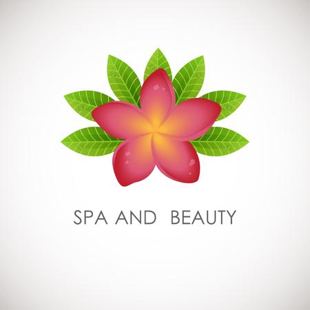 frangipani flower: Pink frangipani flower with green leaves logo. Vector logotype for spa, beauty salon, massage or yoga center
