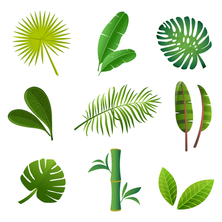 Tropical plants set. Vector illustration of green leaves.
