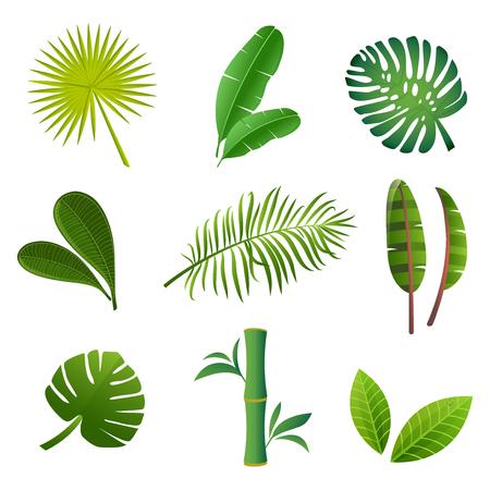 Tropical plants set. Vector illustration of green leaves.