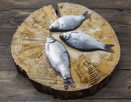 carassius gibelio: Fresh raw fish carp caught lying on a wooden stump. Live fish crucian Carassius auratus gibelio Stock Photo
