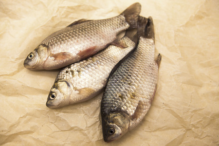 carassius gibelio: A  fresh carp live fish lying on a on paper background . Live fish crucian Carassius auratus gibelio.
