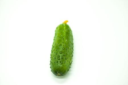 rosids: Fresh appetizing tasty cucumber on a white background Stock Photo