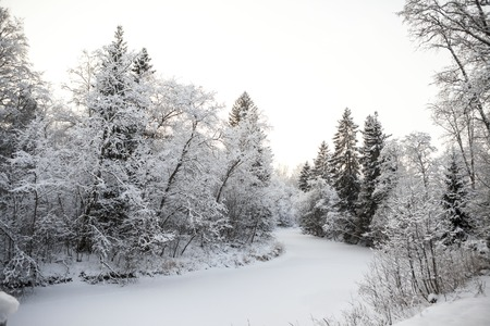 scandinavian winter: Scandinavian winter forest on the banks of the river in the snow at sunset frosty day