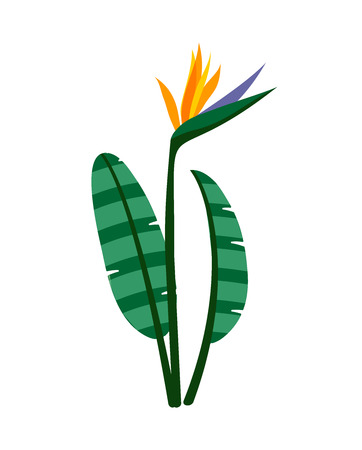 strelitzia: Birds of paradise flowers on white background. Strelitzia flower. Tropical flower. Illustration
