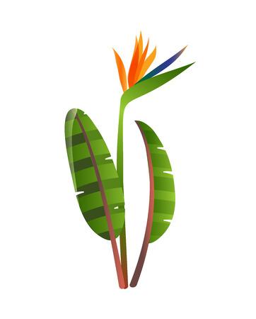 birds of paradise: Birds of paradise flowers on white background. Strelitzia flower. Tropical flower. Illustration