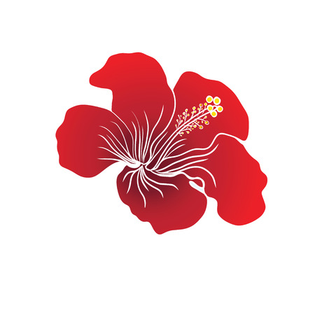 pistil: Red Hibiscus flower on white background. Vector illustration. Can be used for logo, logotype, sticker, web, print and other design