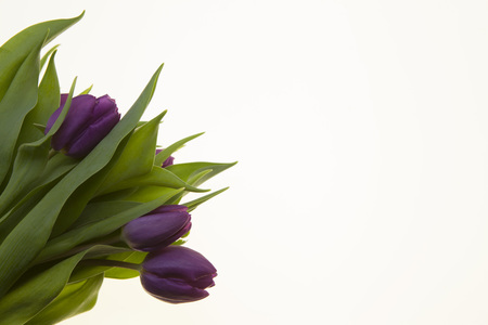 . Card with flowers for wedding invitations anniversary. Background for greeting card with flowers tulips.