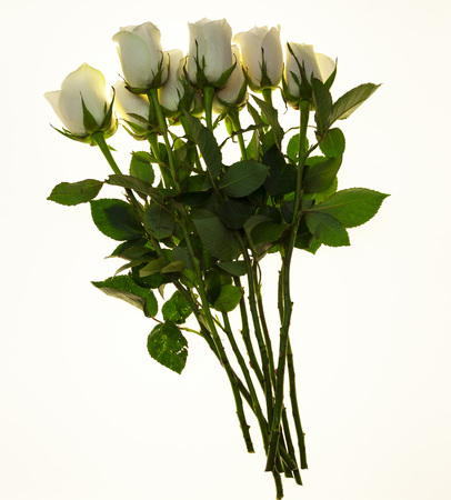 Beautiful white roses in the bouquet, background for wedding cards, greeting card for birthday