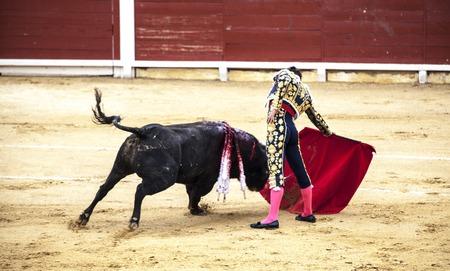 Španělské býčí zápasy. . Rozzuřený býk napadá býčíka. Španělsko Monumentální Corrida de toros