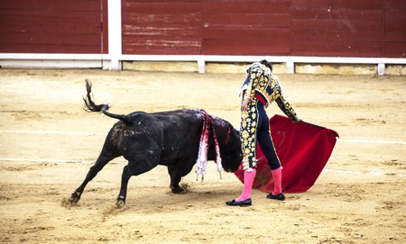 Spanish bullfight. .The enraged bull attacks the bullfighter. Spain Monumental Corrida de toros Stock Photo
