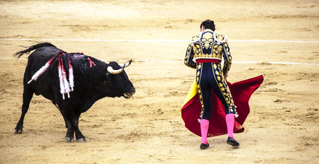 Spanish bullfight. .The enraged bull attacks the bullfighter. Spain Monumental Corrida de toros Stok Fotoğraf