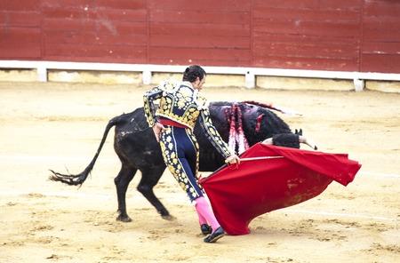 Spanish bullfight. .The enraged bull attacks the bullfighter. Spain Monumental Corrida de toros Sajtókép