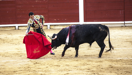 The last battle of the bull. The fight of a bull and bullfighter. Spanish bullfight. .The enraged bull attacks the bullfighter. Spain Monumental Corrida de toros Editoriali