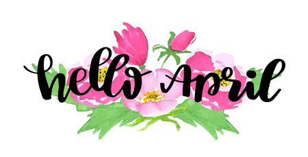 Hello april. Spring lettering quote on wild pink rose background. Flowers on white background with the lettering phrase.   Vector watercolor sketch illustration