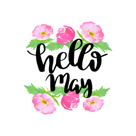 Hello may. Spring lettering quote on wild pink rose background. Flowers on white background with the lettering phrase. Can be used for greeting card, poster, banner. Vector watercolor sketch illustration Vectores