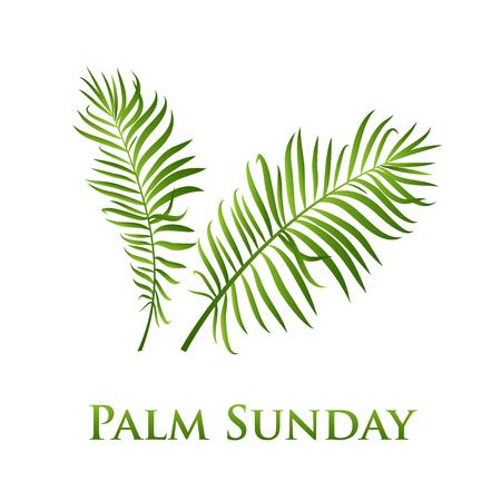 Icono de vector de hojas de palma. Ilustración vectorial para la fiesta cristiana Domingo de Ramos