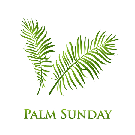Palm leafs vector icon. Vector illustration  for the Christian holiday Palm Sunday 免版税图像 - 102287275