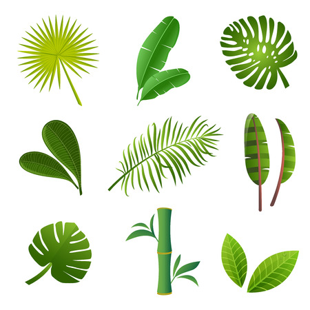 Tropical plants set. Vector illustration of green leaves of Strelitzia, banana, monstera, frangipani, bamboo and other tropical plants Banque d'images - 102367681
