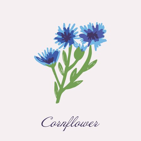 Blue Flower of Cornflower, isolated on white background. Vector hand drawn botanical illustration Vettoriali