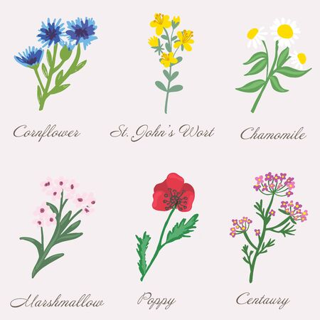 Set of isolated medical plants, flowers and herbs. Vector illustration.